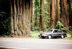 Avenue of the Giants by qmorley
