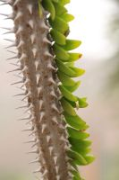 Spikes and Leaves by amm081