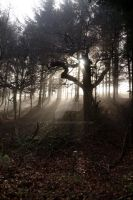 Sun through the trees and mist by Tech-Dave