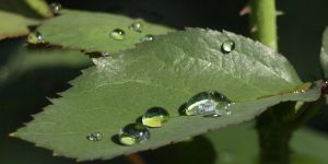 Waterdrops... by AgiVega