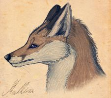 The Stubborn Fox by PawzMallina