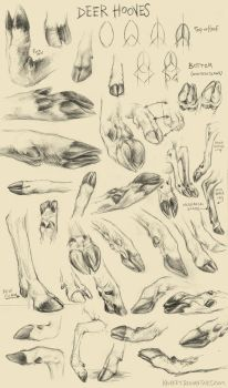 Deer Hoof Studies by kenket