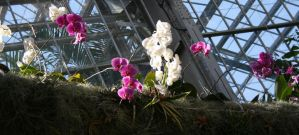 Purple White Orchids by lovintherain