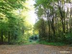 Waldweg in der Sonne by Martina-WW