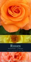 Roses - Stock Pack by kuschelirmel-stock