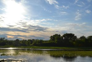 Pond Near Madison, WI 2 by Singing-Wolf-12