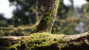 Mossy by VincentPhotography