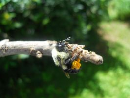 My pet bumble bee by AleighaRawr