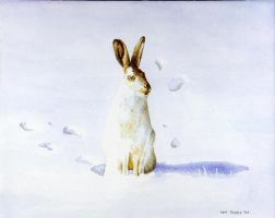 Arctic Hare by Ian-Terry