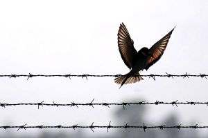 094_free bird by adurus