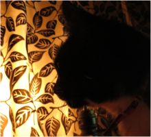 Leo and the lights beyond the curtain 1 by Kattvinge