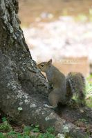 Squirrel 3 by IDR-DoMiNo