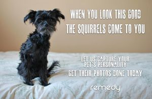 Pets - Ad by remydarling