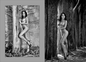 Love Trees by abclic