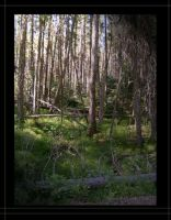 Forest of Shadows by Isbet