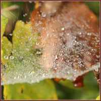 Dewdrops on a Web by Seqbre