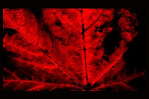 Deep Red 2 by y2jabba