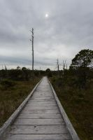 Wooden Walkway to Nowhere Stock by leeorr-stock