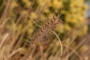 Fuzzy Plant by livelaughlove816