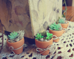 Miniature Clay Succulent Plants by WaterGleam