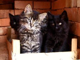 Fluffy Quartet by Upironetopyr