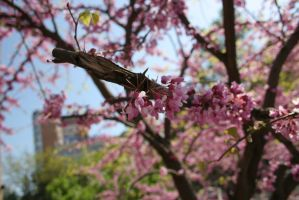 Pink tree blossoming stock #3 by croicroga