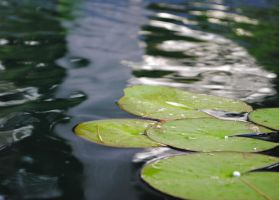 lily pads by Akire-09