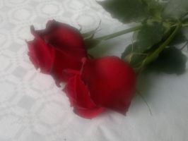 Red Roses 2 by TerezhithaTessa