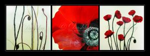 poppy flowers triptych by dushky