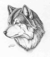 wolf head by ificoulddraw