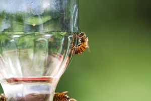 The Bee on the Feeder by lifeinedit