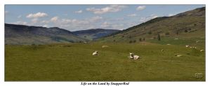 Life on the land by SnapperRod