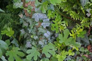 stock 48 foliage by clair0bscur-stock