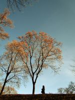 the tree by Gundhardt