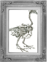 Framed Chicken Skeleton by HiddenStash