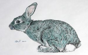 Turquoise Rabbit by TripleS-Art