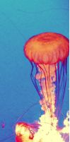 Edit Design 15: Jellyfish by ElenaSaleeby