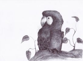 Parrot by Swallow6