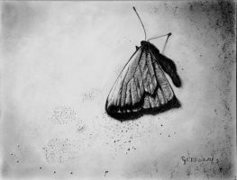 le papillon by Papkalaci