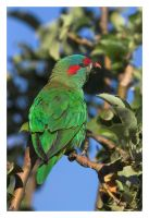 Parrot CRW_5290-01 by Dyer-Consequences