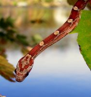 Bloodred Pattern by PaganFireSnake