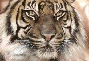 Tigre by Lorjanne