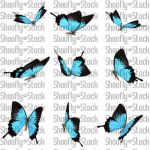 Butterfly Stock 12 by Shoofly-Stock