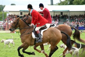 Horse hunting stock14 by popui