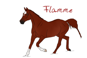 RQS Flamme SOLD by GermanSporthorseStud