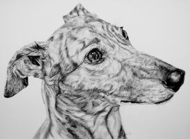 Greyhound by InjectVibrancy