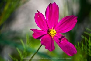 nature_pure_14b by cmg2901