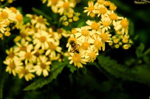 The dream of the attendant bee by maarvin