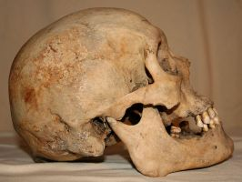 Skull Stock Photo 04 by Aleuranthropy