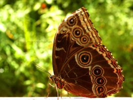 Butterfly by Bimmi1111